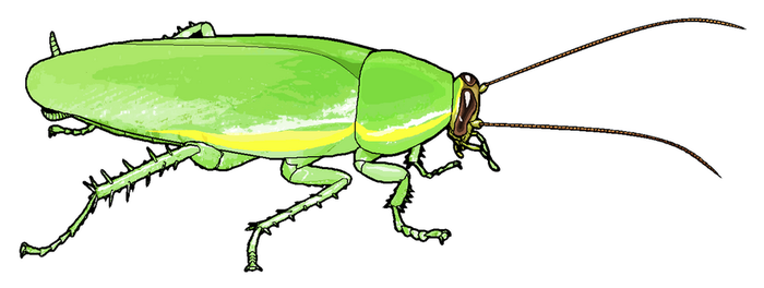 Panchlora Clipart by MisterBug