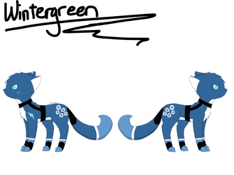 Drawn-by-me ref of Wintergreen by Puzzle-5