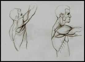 Anatomy Study by Kimsuyeong81