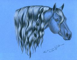 Horse on Blue Paper by LunarMaddness