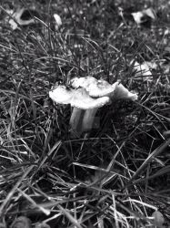 Fungus1 by Forestgnome83