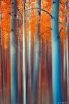 Lines Of Autumn by kkart