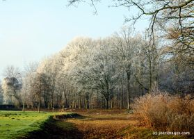 Frosty Forest by joerimages