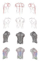 Male anatomy by ryky