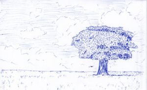 Lonely tree by Jalipuchi
