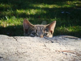 Baby: Peek-A-Boo by Isika
