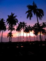 Palm Tree Sunset by Mentasys