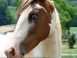 Horse Has Her Eye On Me by meljoy68