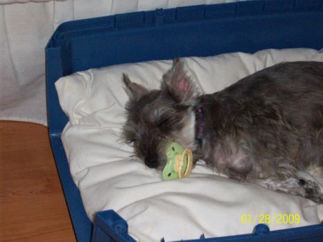 Lola at four months Bedtime by Puremomo