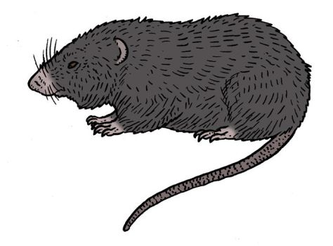 The Lost World Bestiary -Lesser Dark Plateau Mouse by Pristichampsus
