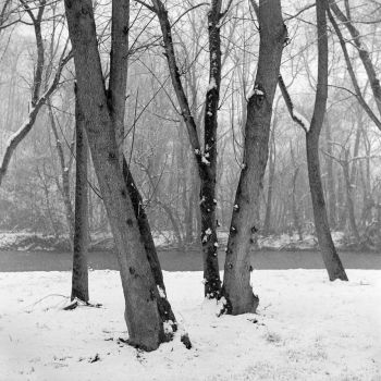 Winter in Rotary Park by The-Infamous-PeeGee
