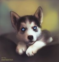 Husky Puppy - Twitch painting by merkerinn