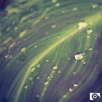 Drops and Lines by SeptimusStuff