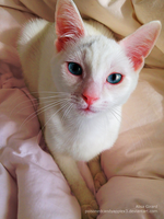 Bright Eyed Kitty by Odie-Farber