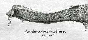 Amphicoelias fragillimus by titanlizard