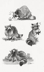 Raccoon Study Sketch Page by dodgyrom