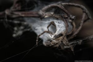 Threatening Cocoon by FemtoGraphy