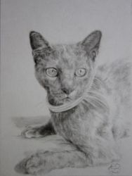 Cat portrait by Artist-AbigailMarie