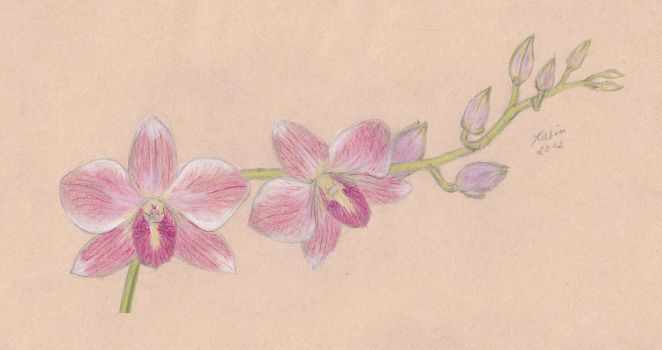 Orchids by KarinM