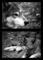 Wolves by Fohat