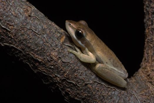 Little Brown Frog by outstar1979