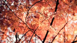 Autumn colors by ssagano