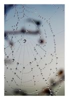 spiderweb at the morning by naturetimescape