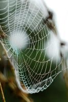 Spider Net With Water Drops by SmileyG