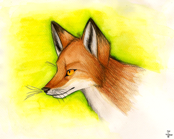 Vulpes by FoxInShadow