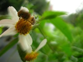Bee and Flower 2 by mnjul