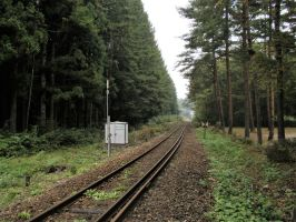 Railway track in forest by Furuhashi335