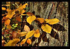 Autumn Colours by zozzy1980