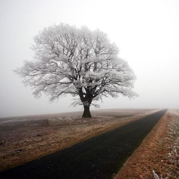 the white tree by augenweide