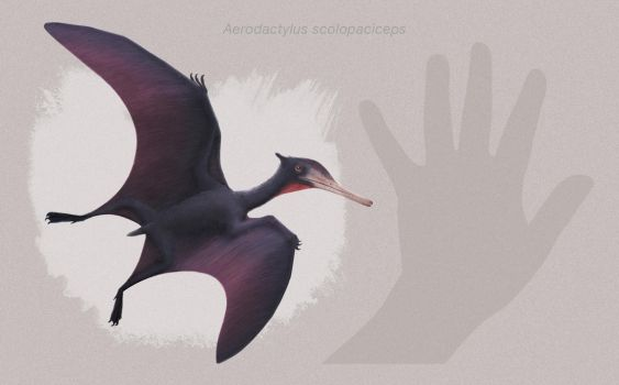 Aerodactylus scolopaciceps by ChrisMasna