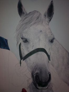 detail of a horse by AdamJAK