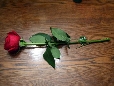 red rose 4 by turtledove-stock