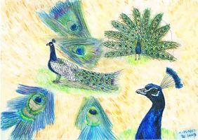 Peacock world by CutePigTail