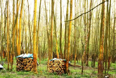 Nordic wood piles by whythe60shateus