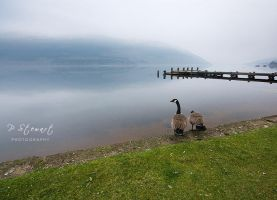 Lomond Geese by FlippinPhil