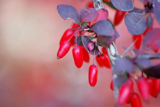 The Fruits Of Fall by Nikki-vdp