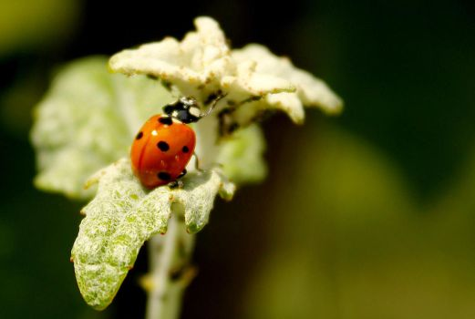 I'm Just A Ladybird Y'know by Adachigawa