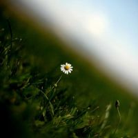 .:camomile:. by neslihans