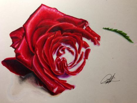 Roses are ff0000 by ChrisHerreraArt