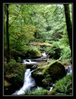 Kennall Vale nature reserve... by Pjharps