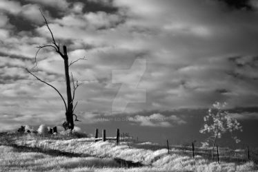 Treeinfrared 6122 by Amish-Ed