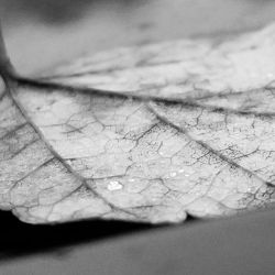 Texture and droplets by MurcMarischal