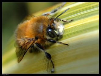 Happy Bee by philemerson