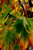 Autumn by Fall-Leaves-Club