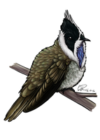 Blue-bearded Helmetcrest by twapa
