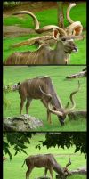 Kudu Package by SalsolaStock